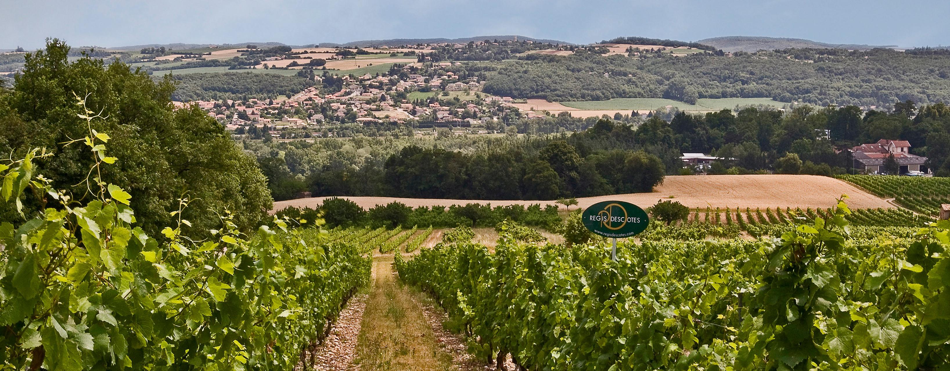 Domaine de Régis Descotes Milléry vignes