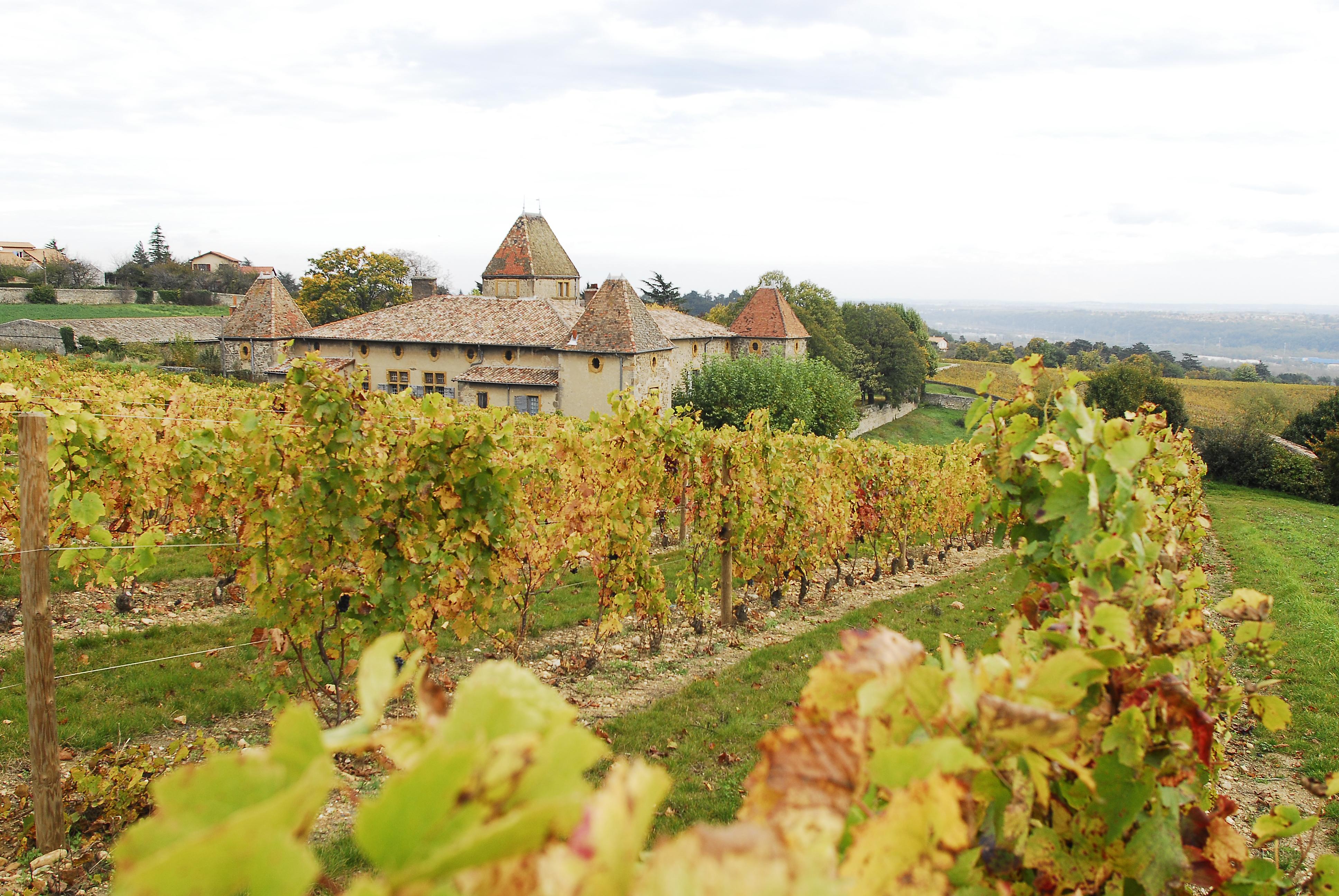 domaine de régis descotes château vignes milléry
