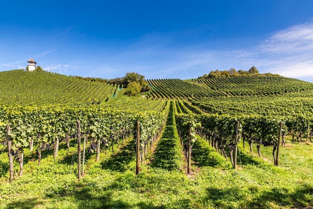 vignes vinister domaine