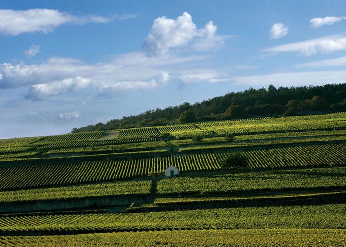 Domaine Lyon Vins Tradition vignes domaines viticoles